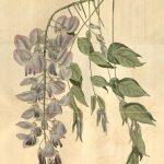 身近な自然と世界の植物―姫路城界隈